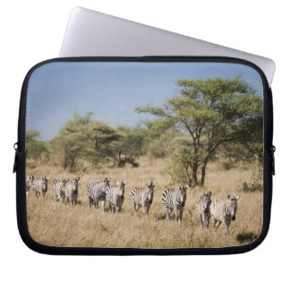 Migrating zebra, Tanzania Laptop Computer Sleeves