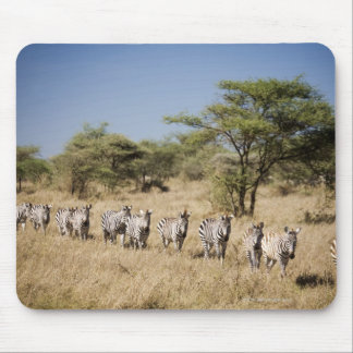 Migrating zebra, Tanzania Mouse Pad