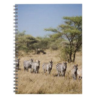 Migrating zebra, Tanzania Note Books