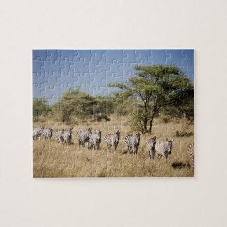 Migrating zebra, Tanzania Puzzle