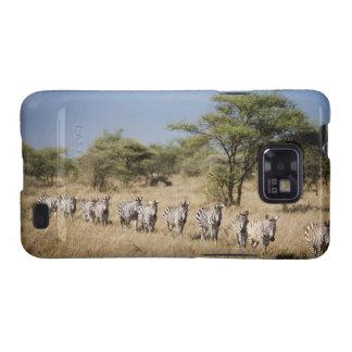 Migrating zebra, Tanzania Samsung Galaxy S Cover