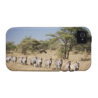 Migrating zebra, Tanzania Vibe iPhone 4 Cases