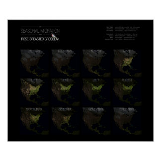 """Migration Map 24"""" x 20"""" Poster"""