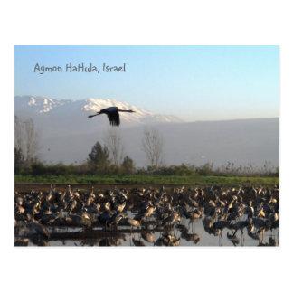 Migratory Birds in Israel Postcard
