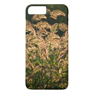 Mijo salvaje (SP del Panicum.) Crecimiento en Funda iPhone 7 Plus
