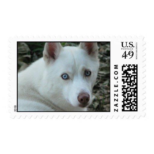 Mika Stamp