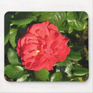 Mikado Hybrid Tea Rose 007 Mouse Pad