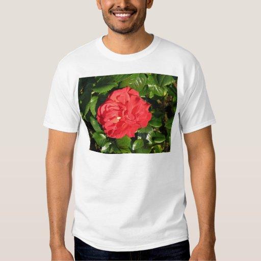 Mikado Hybrid Tea Rose 007 T-Shirt