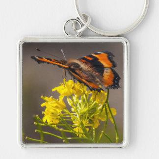 Milbert's Tortoiseshell Butterfly Close Up Keychain