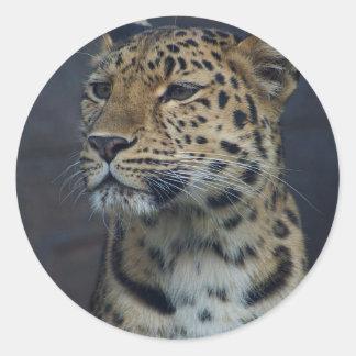 Milena the Amur Leopard Classic Round Sticker
