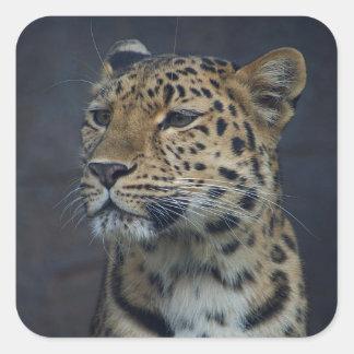 Milena the Amur Leopard Sticker