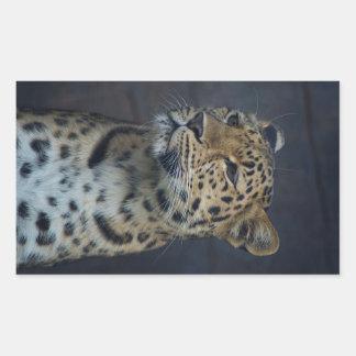Milena the Amur Leopard Rectangular Sticker