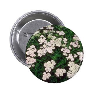 milenrama blanca, (Achillea Sibirica) flores Pin