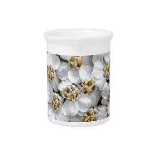 Milenrama (millefolium de Achillea) Jarron