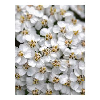 Milenrama (millefolium de Achillea) Membrete