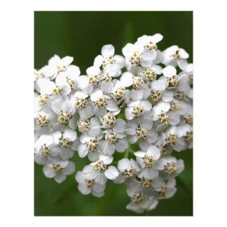 Milenrama (millefolium de Achillea) Membretes Personalizados
