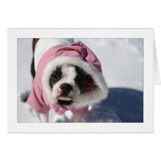Miley in the snow greeting card