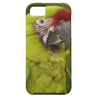 Military macaw (Ara militaris) CAPTIVE. Amazon 2 iPhone SE/5/5s Case
