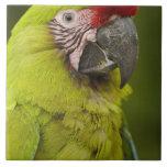 Military macaw (Ara militaris) CAPTIVE. Amazon 2 Ceramic Tile