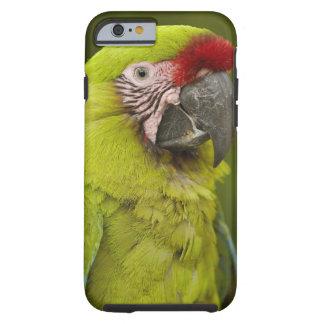 Military macaw (Ara militaris) CAPTIVE. Amazon 2 Tough iPhone 6 Case