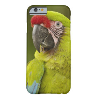 Military macaw (Ara militaris) CAPTIVE. Amazon Barely There iPhone 6 Case