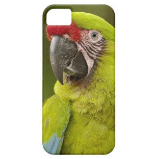 Military macaw (Ara militaris) CAPTIVE. Amazon iPhone SE/5/5s Case