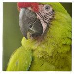 Military macaw (Ara militaris) CAPTIVE. Amazon Ceramic Tile