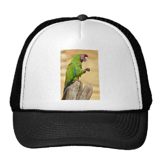 Military macaw perched trucker hat