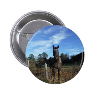 Milk Chocolate Brown Horse in Blue Pinback Buttons