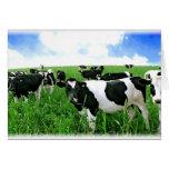 Milk Cows in Green Feild Greeting Card