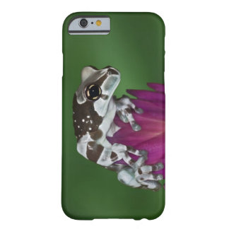 Milk Frog, Trachycephalus resinifictrix Barely There iPhone 6 Case