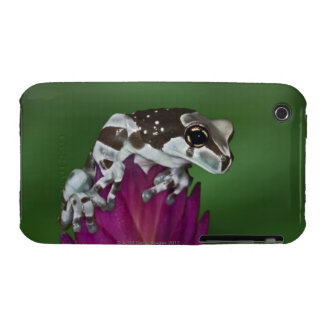 Milk Frog, Trachycephalus resinifictrix iPhone 3 Covers