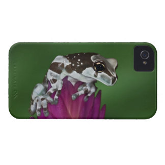 Milk Frog, Trachycephalus resinifictrix iPhone 4 Case-Mate Case