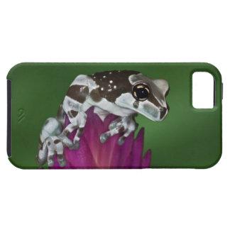Milk Frog, Trachycephalus resinifictrix iPhone SE/5/5s Case