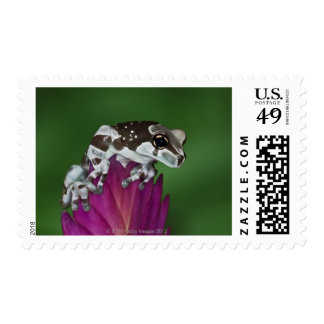 Milk Frog, Trachycephalus resinifictrix Stamps
