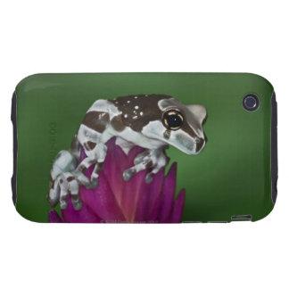 Milk Frog, Trachycephalus resinifictrix Tough iPhone 3 Covers
