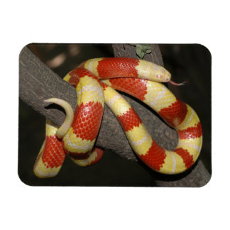 Milk snake magnet