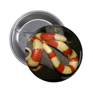 Milk snake pinback button