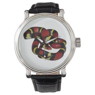 Milk snake watch