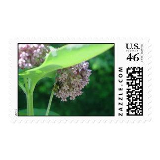 Milkweed and Bumblebee Stamps