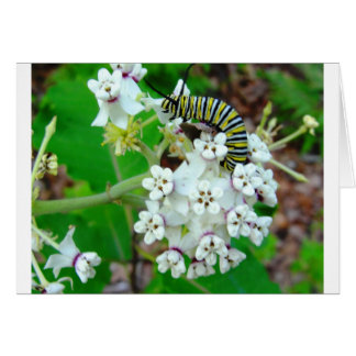 Milkweed and Monarch Greeting Card