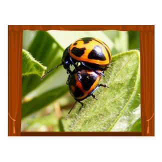 Milkweed Beetles ~ postcard