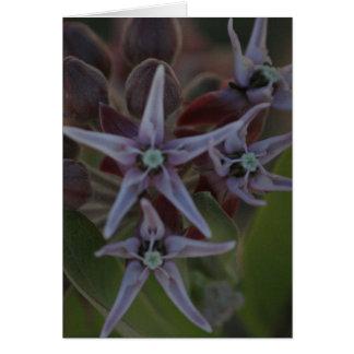 Milkweed Blossom Card