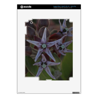 Milkweed Blossom Decals For iPad 3