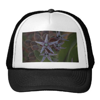 Milkweed Blossom Trucker Hat