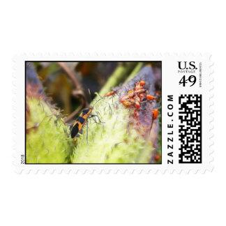 Milkweed Bug And Babies - Oncopeltus Fasciatus Postage Stamp
