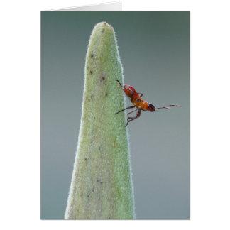 Milkweed Bug Nyph Card