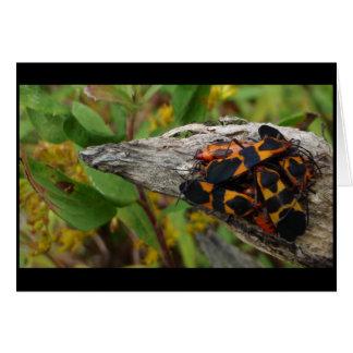 Milkweed Bugs Card