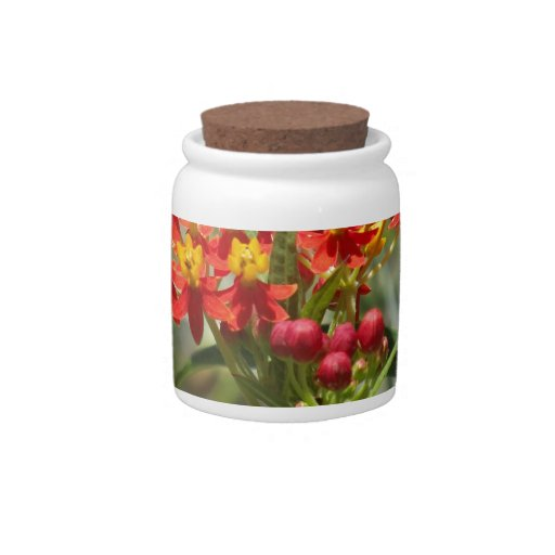 Milkweed colorido jarras para caramelos