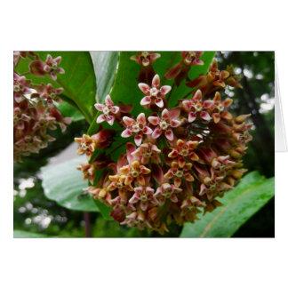 Milkweed del Wildflower de la tarjeta de nota del